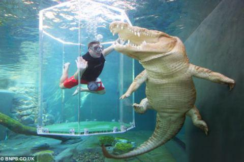 Barbat cu crocodil